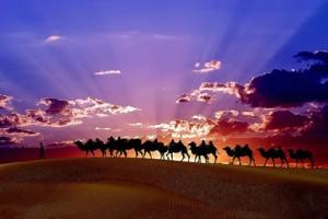 砂漠とラクダ2